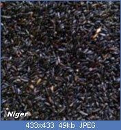 Cliquez sur l'image pour la voir en taille réelle  Nom : graines-de-niger-4-kg-versele-laga-31-150x150.jpg Affichages : 20 Taille : 49,5 Ko ID : 121757