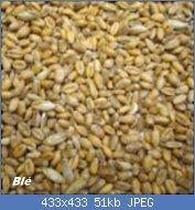 Cliquez sur l'image pour la voir en taille réelle  Nom : graines-germees-ble-150x150.jpg Affichages : 18 Taille : 50,7 Ko ID : 121760
