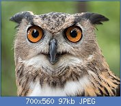 Cliquez sur l'image pour la voir en taille réelle  Nom : 1280px-Eurasian_eagle-owl_(44088).jpg Affichages : 1 Taille : 96,7 Ko ID : 123529