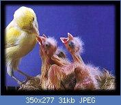 Cliquez sur l'image pour la voir en taille réelle  Nom : breeding.jpg Affichages : 2314 Taille : 30,6 Ko ID : 63281