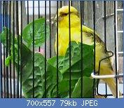 Cliquez sur l'image pour la voir en taille réelle  Nom : IMG_7568.jpg Affichages : 18 Taille : 79,0 Ko ID : 121750