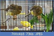 Cliquez sur l'image pour la voir en taille réelle  Nom : IMG_7598.jpg Affichages : 16 Taille : 72,7 Ko ID : 121755