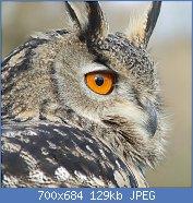 Cliquez sur l'image pour la voir en taille réelle  Nom : 1024px-Bubo_bubo_portrait.jpg Affichages : 2 Taille : 129,0 Ko ID : 123531