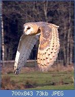 Cliquez sur l'image pour la voir en taille réelle  Nom : Flying_owl.jpg Affichages : 0 Taille : 73,4 Ko ID : 123534