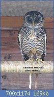Cliquez sur l'image pour la voir en taille réelle  Nom : 800px-Rufous-legged_owl.jpg Affichages : 1 Taille : 169,1 Ko ID : 123536