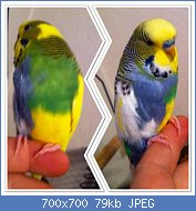 Cliquez sur l'image pour la voir en taille réelle  Nom : image_zps4be9d233.jpg Affichages : 216 Taille : 78,7 Ko ID : 102609