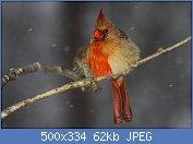 Cliquez sur l'image pour la voir en taille réelle  Nom : 4424970922_edaf04b706.jpg Affichages : 117 Taille : 61,7 Ko ID : 102611