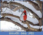 Cliquez sur l'image pour la voir en taille réelle  Nom : b1b48d37.jpg Affichages : 109 Taille : 63,7 Ko ID : 102612