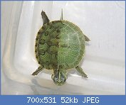 Cliquez sur l'image pour la voir en taille réelle  Nom : HALFblackHALFgreentortuebicolore symetrique.jpg Affichages : 133 Taille : 52,4 Ko ID : 103544