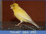 Cliquez sur l'image pour la voir en taille réelle  Nom : canari10.jpg Affichages : 138 Taille : 36,3 Ko ID : 72415