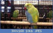 Cliquez sur l'image pour la voir en taille réelle  Nom : images6666.jpg Affichages : 148 Taille : 10,1 Ko ID : 97437