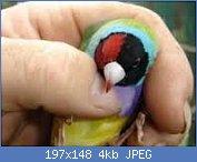 Cliquez sur l'image pour la voir en taille réelle  Nom : imagesAP42SANI.jpg Affichages : 148 Taille : 3,9 Ko ID : 97443