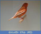 Cliquez sur l'image pour la voir en taille réelle  Nom : canaris004a_zoom.jpg Affichages : 231 Taille : 96,6 Ko ID : 105296