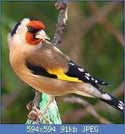 Cliquez sur l'image pour la voir en taille réelle  Nom : fde6c01b16bbee60a0c0cee1821a63e1--birds.jpg Affichages : 50 Taille : 91,0 Ko ID : 121695