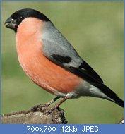 Cliquez sur l'image pour la voir en taille réelle  Nom : photo-bouvreuil_280x280.jpg Affichages : 52 Taille : 42,1 Ko ID : 121696