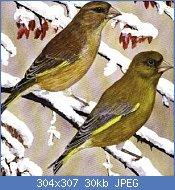 Cliquez sur l'image pour la voir en taille réelle  Nom : VERDIER D'EUROPE  (CARDUELIS CHLORIS).jpg Affichages : 1877 Taille : 30,0 Ko ID : 65513