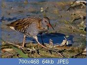 Cliquez sur l'image pour la voir en taille réelle  Nom : 1280px-Ralaqu.jpg Affichages : 12 Taille : 64,2 Ko ID : 123397