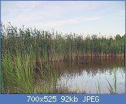 Cliquez sur l'image pour la voir en taille réelle  Nom : 1280px-Harilik_pilliroog.jpg Affichages : 11 Taille : 92,3 Ko ID : 123400