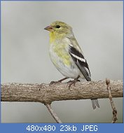 Cliquez sur l'image pour la voir en taille réelle  Nom : dee4b5b1fe1a4eeabd21a5b601557c01-Medium.jpg Affichages : 36 Taille : 23,3 Ko ID : 121691