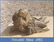 Cliquez sur l'image pour la voir en taille réelle  Nom : feather duster gris-vert.jpg Affichages : 288 Taille : 57,8 Ko ID : 75854