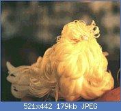 Cliquez sur l'image pour la voir en taille réelle  Nom : feather duster lutino présenté à la réunion technique de Ste.jpg Affichages : 174 Taille : 178,7 Ko ID : 75856