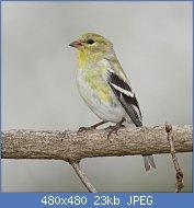 Cliquez sur l'image pour la voir en taille réelle  Nom : dee4b5b1fe1a4eeabd21a5b601557c01-Medium.jpg Affichages : 35 Taille : 23,3 Ko ID : 121691