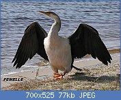 Cliquez sur l'image pour la voir en taille réelle  Nom : Darterfemale.jpg Affichages : 3 Taille : 76,8 Ko ID : 121962