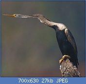 Cliquez sur l'image pour la voir en taille réelle  Nom : 2010-kabini-darter.jpg Affichages : 3 Taille : 27,0 Ko ID : 121967