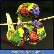 Cliquez sur l'image pour la voir en taille réelle  Nom : 2609451938_d6b0a0d0e3_b.jpg Affichages : 237 Taille : 92,0 Ko ID : 105165