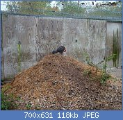 Cliquez sur l'image pour la voir en taille réelle  Nom : Brushturkeykansaszoo.jpg Affichages : 37 Taille : 118,2 Ko ID : 122940