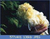 Cliquez sur l'image pour la voir en taille réelle  Nom : feather duster jaune.jpg Affichages : 156 Taille : 136,0 Ko ID : 75855