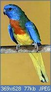 Cliquez sur l'image pour la voir en taille réelle  Nom : splendid_c.jpg Affichages : 164 Taille : 76,6 Ko ID : 78350