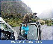 Cliquez sur l'image pour la voir en taille réelle  Nom : 1_1295348519_kea-bird-attacks-my-van-large-parrot.jpg Affichages : 89 Taille : 99,0 Ko ID : 106850