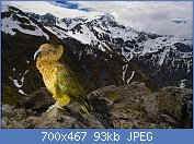 Cliquez sur l'image pour la voir en taille réelle  Nom : kea-et-montagne.jpg Affichages : 94 Taille : 93,1 Ko ID : 106852