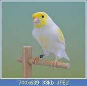 Cliquez sur l'image pour la voir en taille réelle  Nom : 3065684739_2_3_e3OiaAQD.jpg Affichages : 120 Taille : 32,9 Ko ID : 93145