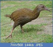 Cliquez sur l'image pour la voir en taille réelle  Nom : 1024px-Weka_(bird).jpg Affichages : 11 Taille : 143,9 Ko ID : 123396