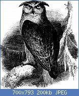 Cliquez sur l'image pour la voir en taille réelle  Nom : An_illustrated_manual_of_British_birds_(1899)_(20708854222).jpg Affichages : 3 Taille : 199,8 Ko ID : 121936