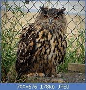 Cliquez sur l'image pour la voir en taille réelle  Nom : 1024px-Eagle_Owl._Bubo_bubo_(46576306432).jpg Affichages : 5 Taille : 178,3 Ko ID : 121937