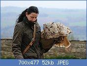 Cliquez sur l'image pour la voir en taille réelle  Nom : 1280px-Vogelflugschau_im_Schloß_Augustusburg._2H1A8598WI.jpg Affichages : 5 Taille : 51,6 Ko ID : 121940