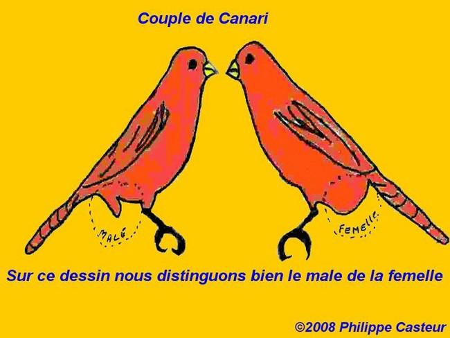 photo comment reconnaitre canaris male femelle