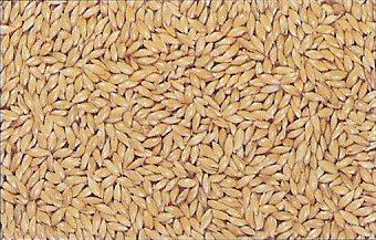 Les graines pour canaris au paradis des canaris a vos - Graines de tournesol pour oiseaux ...
