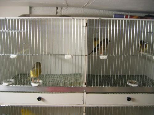 grille de fond de cage au paradis des canaris a vos plumes donnez vous des ailes. Black Bedroom Furniture Sets. Home Design Ideas