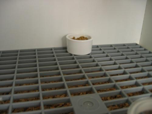 construction de batteries d 39 elevage au paradis des canaris. Black Bedroom Furniture Sets. Home Design Ideas