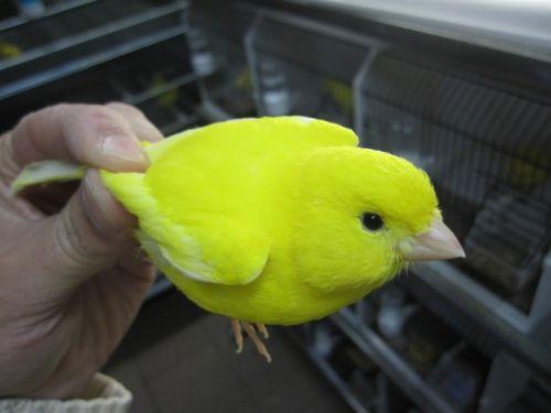 jaunes_10.jpg