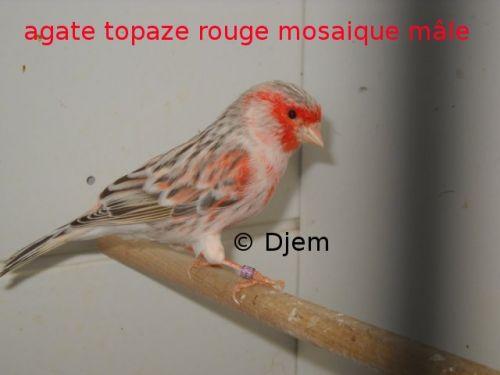 topaze1.jpg