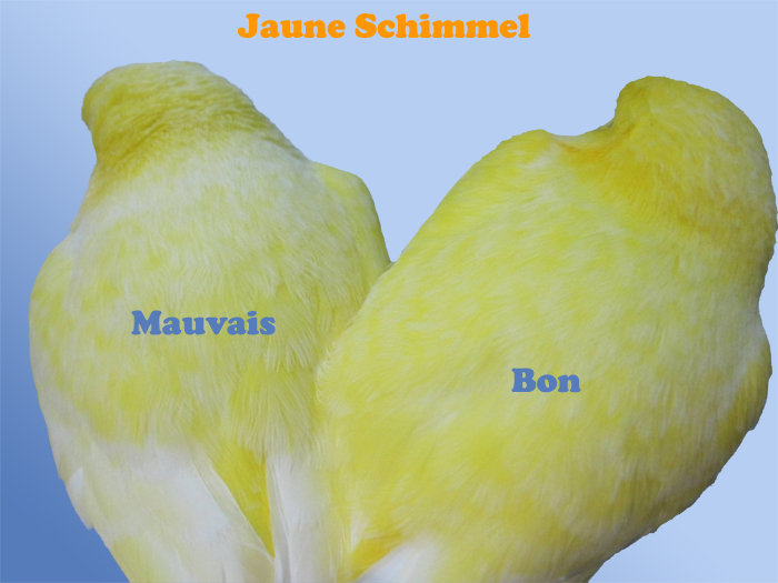 difference_jaune_schimmel.jpg