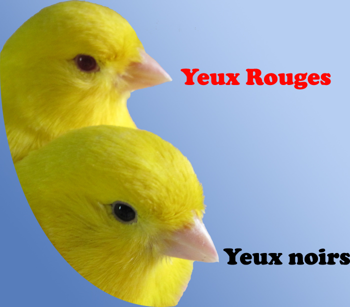 yeux_rouges_noirs.jpg